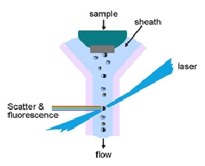chapter 2 the flow cytometer flow cytometry a basic introduction