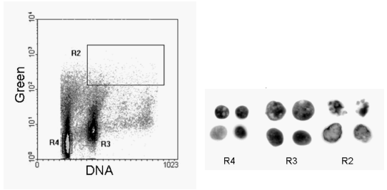 Chapter 9: Cell Death, Including Apoptosis | Flow Cytometry